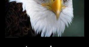 Eagle- America Deserves Better