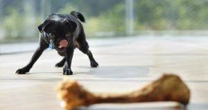 Dog with bone treat